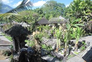 南国風植物いっぱい